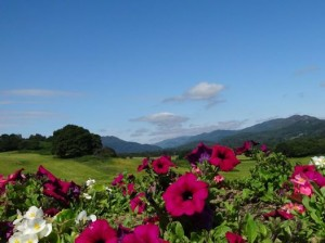 flowery comrie