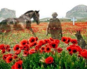 war poppies
