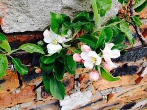 Orchard.2