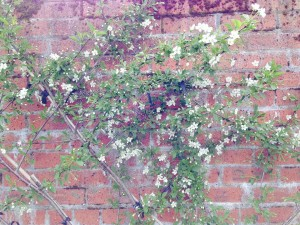 Orchard.4