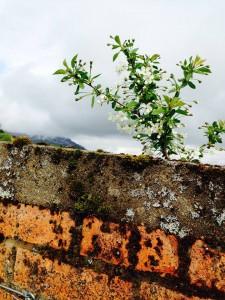 Orchard.6