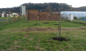 orchard.182
