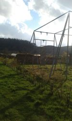 Comrie Community Orchard