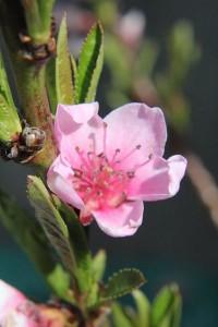 blossom.4