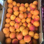 fruit.1