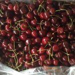 fruit.4