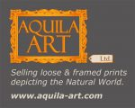 Aquila Art Ltd