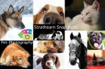 Strathearn Snapshots Pet Photography