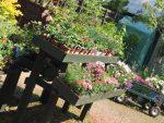 Tullybannocher Cafe & Riverside Garden Centre – Gift Shop