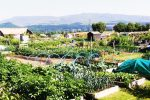 Comrie Allotments Association