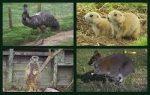 Auchingarrich Wildlife Centre