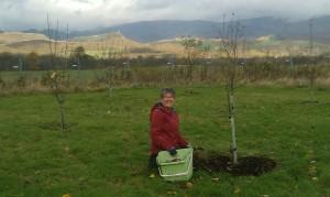 orchard.1