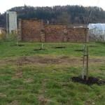 orchard.18