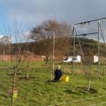 orchard.3