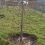 orchard.5