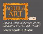 Aquila Art Ltd