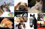 Strathearn Snapshots Pet Photography