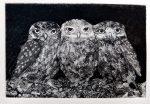 Sheila Roberts Prints